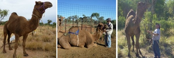 Karla Hooper Gypsy Dreaming Part 3 Banjo Camel